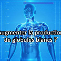 Comment augmenter sa production de globules blancs ?