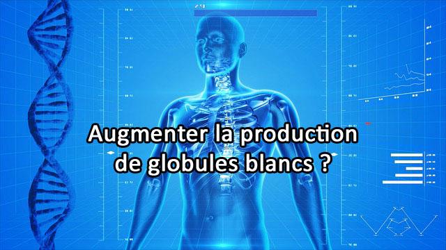 Comment augmenter la production de globules blancs?