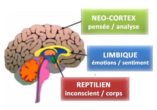 Cerveau reptilien émotionnel penseur
