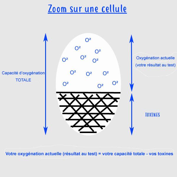 Oxygénation cellulaire