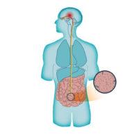 Comment activer le système nerveux parasympathique?