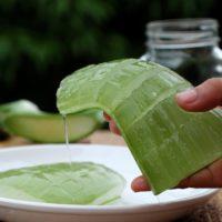 Comment utiliser l'Aloe Veraau quotidien?