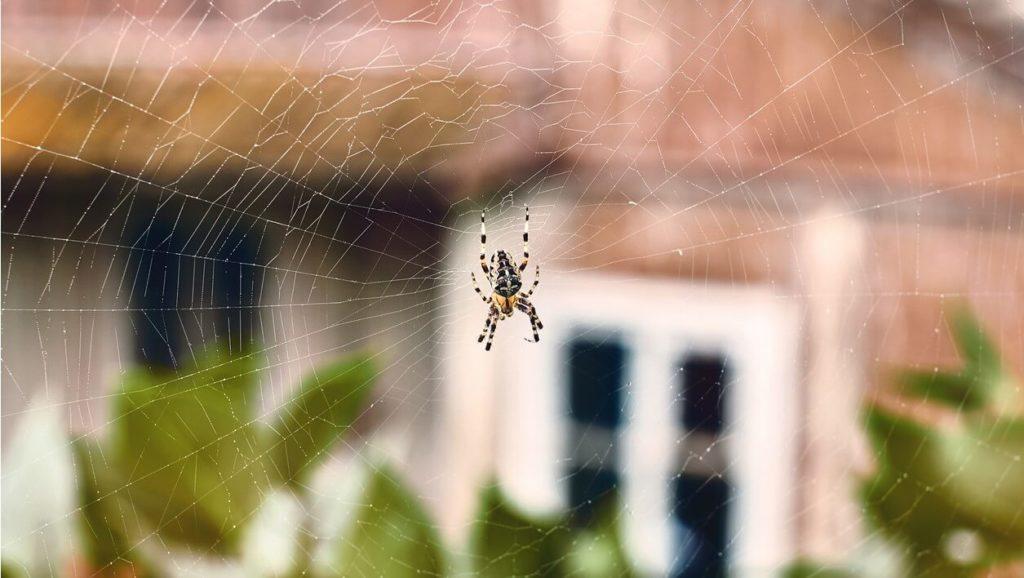 Comment vaincre sa peur des araignées