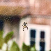 Comment vaincre sa peur des araignées?