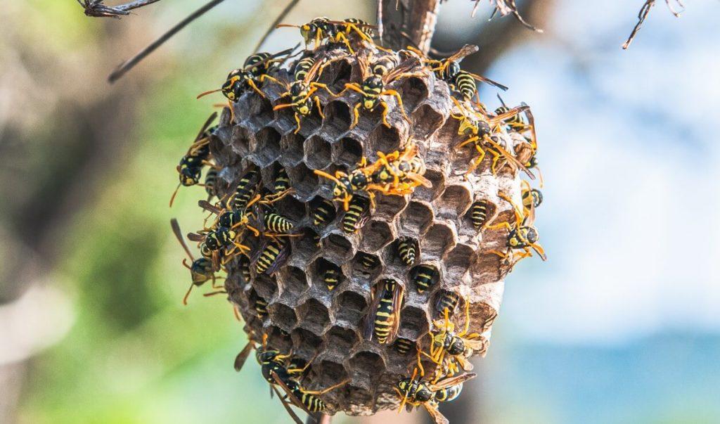 Comment vaincre sa phobie des guêpes et des abeilles