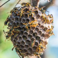 Comment vaincre sa phobie des guêpes et des abeilles?