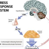 Hormone du stress: mieux comprendre le cortisolet l'adrénaline?