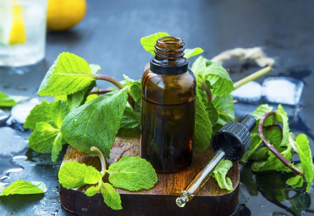 Pourquoi et comment utiliser la menthe poivrée en huile essentielle